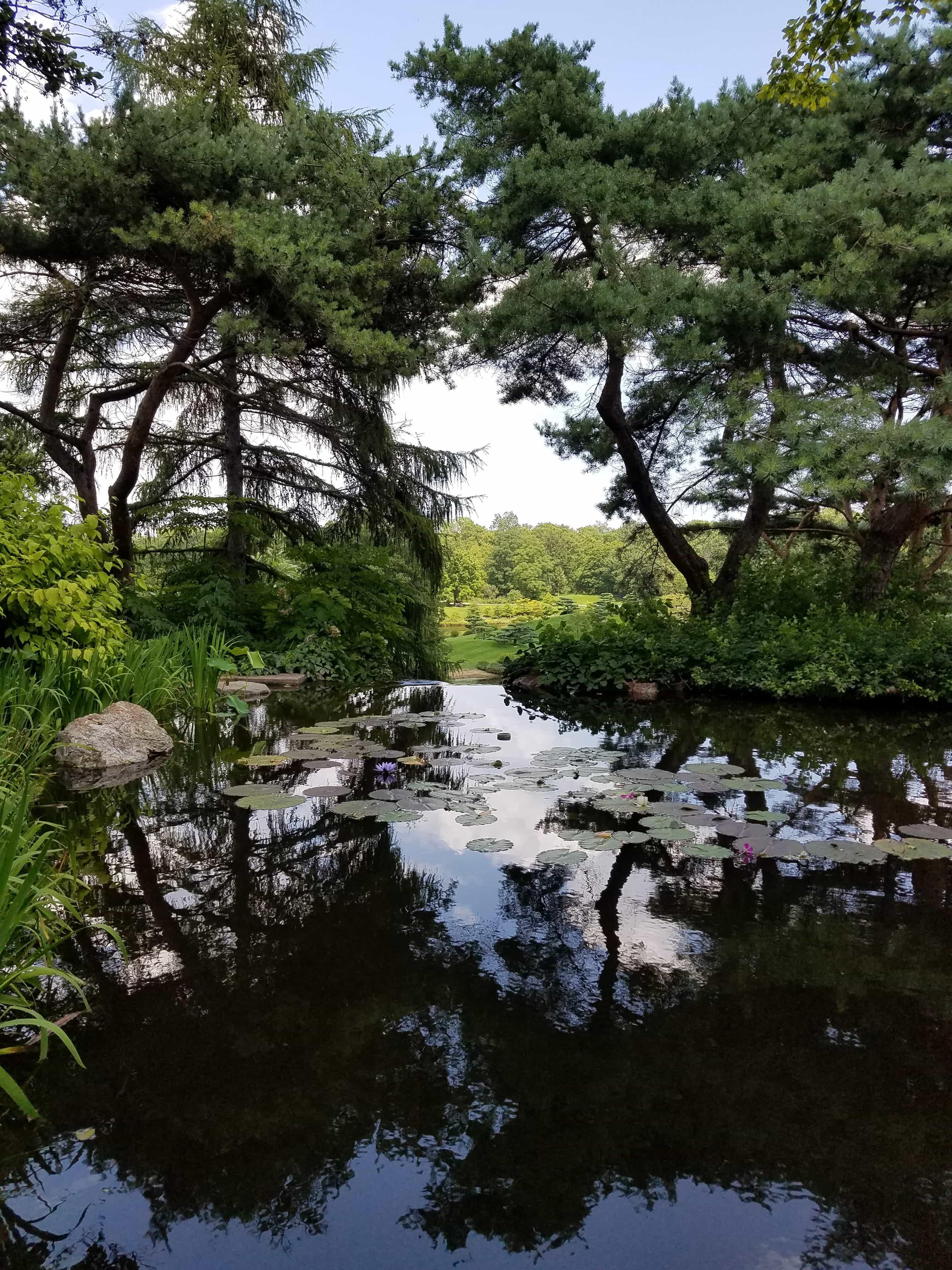 Chicago Botanic Garden - Lily Pond